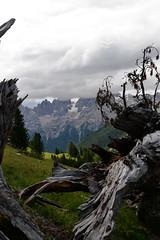 La bellezza della natura (lbaroffio) Tags: dolomiti trentino italy mountain tronco albero morto