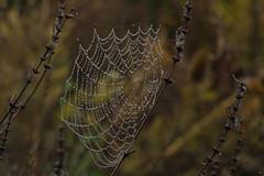 ckuchem-6151 (christine_kuchem) Tags: nahaufnahme regen regentropfen spinnennetz tropfen wasser wassertropfen romantisch