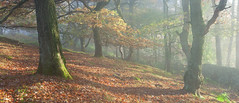 Edge of Lawrence Field (Paul Newcombe) Tags: lawrencefield autumn 2015 peakdistrict peaks derbyshire mist tree fog england outdoor woods paulnewcombephotography uk british landscape