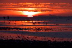 Sunset above Neuwerk at North Sea, Germany (tfadam) Tags: northsea seagulls tideland sunset island clouds evening