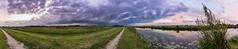 Ackerdijkse Plassen (MBarendse) Tags: rotterdam ackerdijkse plassen urban nature polder delft pijnacker cows koeien haas lepelaar