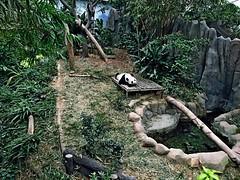 2016.05 Singapore River Safari 0006 (marcin matula) Tags: 201605 singapore nightsafari