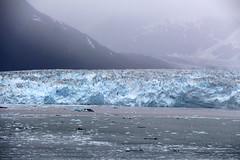 IMG_0484 (EliaZane) Tags: alaska glacier mendenhall sea ocean ice blue cruise