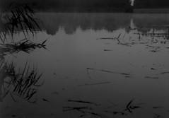 (sonya.gerasimova) Tags: ilfordfp4 film filmphoto 35mm bw xg9