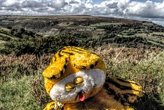 The morning after the night before (Jon_Wales) Tags: hangover wales welsh stuffedtoy flytipping breconbeacons