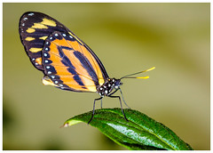 beautiful butterfly... (kevingrieve610) Tags: pop up flash flickr fujifilm london city natural history museum