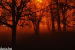 Foggy Evening - Centennial Park, Oak Lawn IL (RickDrew) Tags: park longexposure trees light orange tree fog night forest dark evening centennial illinois foggy eerie creepy il humid oaklawn