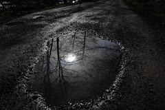 (Giramund) Tags: road reflection tree puddle