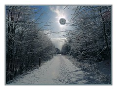 Alien Sun (Walter A. Aue) Tags: trees winter sky sun snow canada novascotia trail puzzling digitallyaltered walteraaue