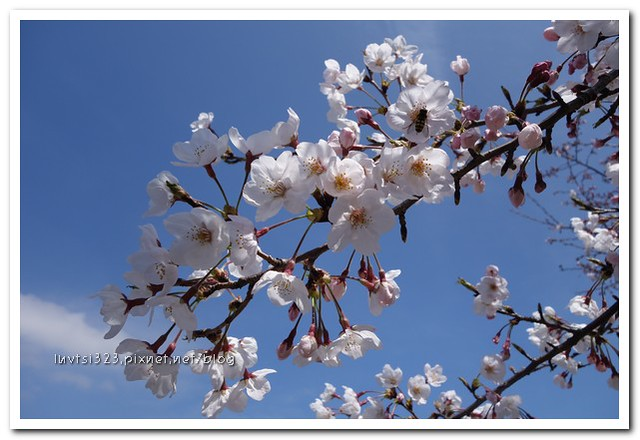 사귀포유체꽃축제45