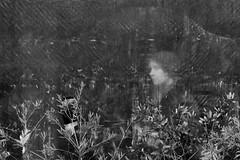 aquarium (willy vecchiato) Tags: street winter wild portrait people blackandwhite woman abstract flower art monochrome aquarium mono italu biancoenero nylond monocramatico