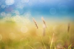 ten days of paradise (irina_escoffery) Tags: