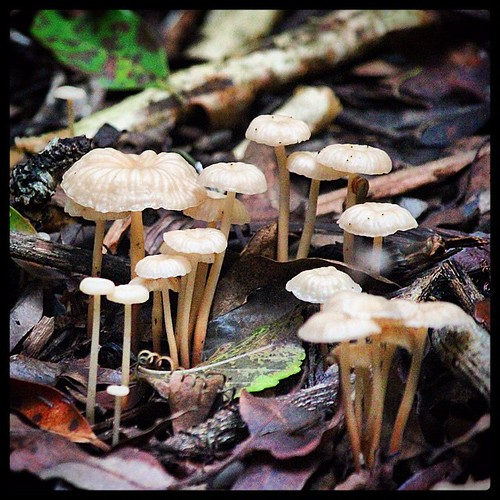 Fungi six from #Ravensbourne National Park. #Forest within a forest. From the #fungi series. @kimsankey