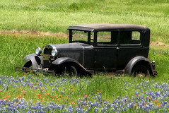 Model A Ford in Wildflowers