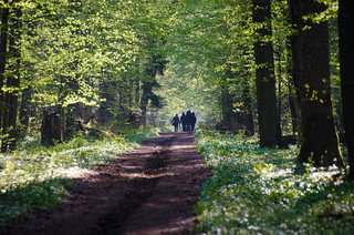 Bialowieza: Europe's only remaining primeval  forest