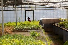 Viveiro-4 (Secom UnB) Tags: plantas jardim prc antonio jardins estufa prefeitura viveiro mudas antnio jardinagem campusdarcyribeiro