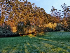 Early morning shadows.... (misty1925) Tags: snow samsung victoria phonecamera gumtree paddock gippsland westgippsland snapseed strezleckihills