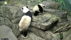 2016_07-20b (gkoo19681) Tags: nationalzoo sohappy stealing meixiang beibei unfortunateevents sharingiscaring yummyapple ccncby