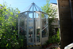 After seven weeks of the frame wobbling in wind and some seven or eight friends of varying abilities helping.A classroom assistant put the last six pieces of glass in with ease (Lord Cogsby) Tags: finished greenhouse malcolms