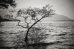 Lakes, Killarney.....  tick.  #lakesofkillarney #kerry #Ireland #nikon #d7000 #nikond7000 (urbanfoxdesign) Tags: d7000 nikon lakesofkillarney nikond7000 ireland kerry blackandwhite monochrome bw landscape