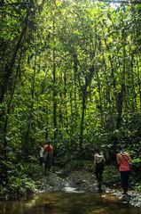 _NGE7659.jpg (Nico_GE) Tags: selvahumedatropical colombia sancipriano pacifico comunidadesafro valledelcauca co