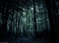 Dark Woods (DarkStarPhoto) Tags: photography forest woods dark scary dog ireland