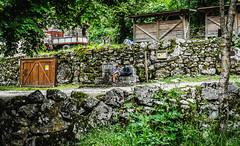 _DSC4009 (Foval Fotografa) Tags: roja asturias viajes espaa luarca cudillero llanes san vicente de la barquera bulnes fovalfotografia