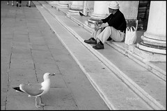 VISION SHIFT (pathikdebmallik) Tags: bird man italy venice incrediblevenice blackandwhite europe steps vanishingline