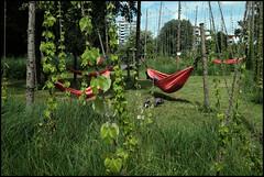 Faire une pause (d.cairn) Tags: art festival rouge culture vert des installation uga amiens jardins hamac hortillonnage davidbelamy yvancappelaere mylneandreoletti