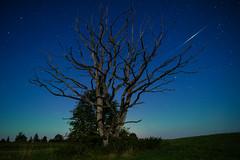 8x8sec (Tanel Kindsigo) Tags: auroraborealis iridiumflare night nightcolors northernlights oldtree stars