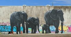 """The """"urban jungle"""" Christchurch NZ (Bernard Spragg) Tags: art murals paintings lumixfz1000"""