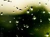 Reflections of Light (Madija~) Tags: rain drops green light sun espiritual poetry love nature window nikon d200 ventana luz verde نافذة أخضر مطر نور شمس sol