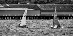 W&FYC_PIER_RACE_2016--5 (Stewart's 2013/365) Tags: walton frinton yacht club dingy sailing 2016 backwaters stone point pier