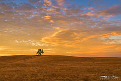 Orange Freeze - Yolo County, California (Tactile Photo | Greg Mitchell Photography) Tags: loneoak landscape storm rollinghills evening clouds ranchmfield california oaktree lonetree yolo beautiful august yolocounty farm sunset color monday dunninganhills