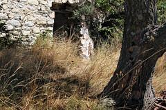 Rsum  promenade des hauteurs de Saorge, Alpes-Maritimes, aot 2016 (Stphane Bily) Tags: stphanebily alpesmaritimes mas