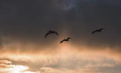 _DO14892 (Edoardo Marino) Tags: palos pv palosverdes san pedro california sunset park ocean sun light outdoor shoot people silhouette tamron tamron85 85mm nikon nikkor 20mm wideangle lightroom edoardomarino marinoedoardo dodi d810 birds sky clouds beauty colors
