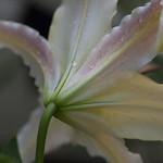 oneplant, ouryard, jdy199 XX201607179041.jpg thumbnail