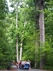 Bronx Zoo - People (Steven Bornholtz) Tags: bronx new york city ny nyc trees forest people us usa united states america nature outdoors september 2016 steven steve bornholtz olympus ep5 green pen picture image imagery photography stroller zoo path leaves