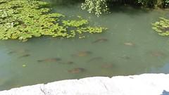 Teich auf der Insel Mainau