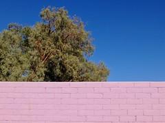 Pink wall blue sky green tree (Nicolas) Tags: vue view t summer soleil sunny catchy couleur color usa vacances holidays nicolasthomas california californie hotel 29palms mur wall sky ciel arbre tree vert green bleu blue rose pink