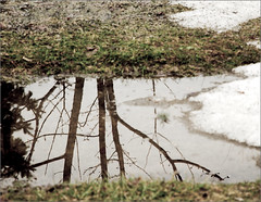 Spring Reflection (joeldinda) Tags: winter snow reflection puddle spring melting raw snowmelt d300 joeldinda 21365
