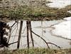 Spring Reflection (joeldinda) Tags: winter snow reflection puddle spring melting raw snowmelt d300 joeldinda 21365