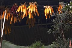 En la cámara se guardaban las conservas de tomate, las sillas viejas, los trajes que nadie usaba... (Micheo) Tags: memories popcorn cellar recuerdos maiz cotufas palomitas cámara almacén mazorcas rosetas panochas