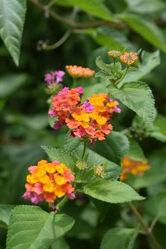 Flowers in the Satonda Island