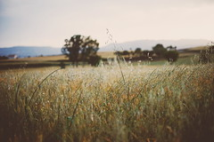 Summer field (Laia Vilarrasa) Tags: sunset summer sun field evening dusk heat vegetation goldenhour