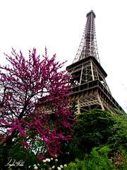 Torre Eiffel I (Angélica Robles) Tags: eiffel francia parís