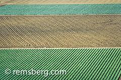 SALINAS, CALIFORNIA - Salinas Valley fields (Remsberg Photos) Tags: california usa green landscape pattern farm farming salinas rows fields crops agriculture horticulture salinasvalley