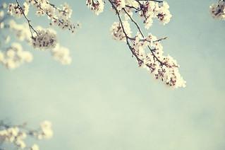 Un pedacito de cielo en Hyde Park