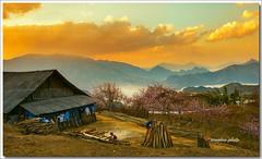 _MG_6641 Hầu thào,Sapa. (HUONGBEO PHOTO) Tags: sky mountain nature clouds landscape sapa laocai yallow hightland phongcảnh thiênnhiên hầuthào