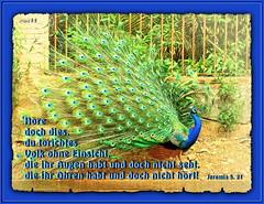Blindheit1 /  Blindness1 (Martin Volpert) Tags: christ god faith lord bible christianity bibbia herr scripture blindness scriptures biblia dummheit gott tricht holyspirit bijbel glauben erkenntnis christentum bibleverses jesuschristus heiligergeist einsicht blindheit bibelverskarte mavo43 lovetruth unverstand